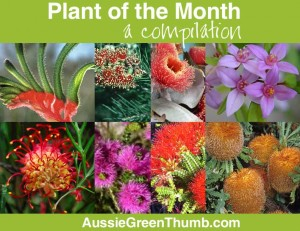 better garden plant of the month compilation