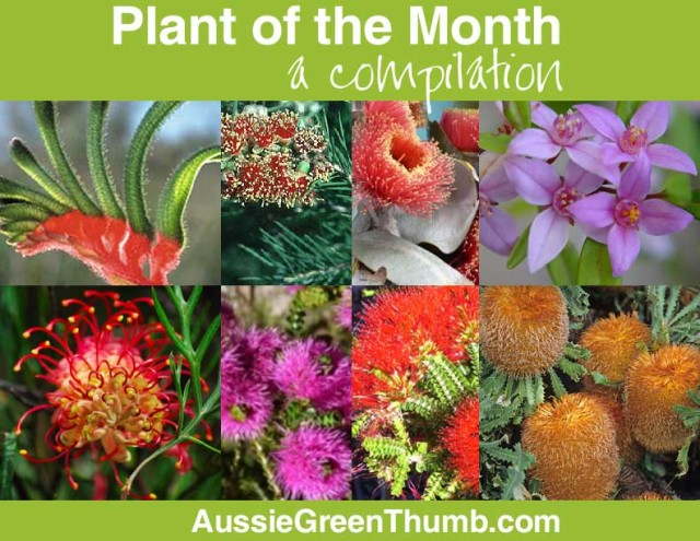 Plant of the month: a compilation