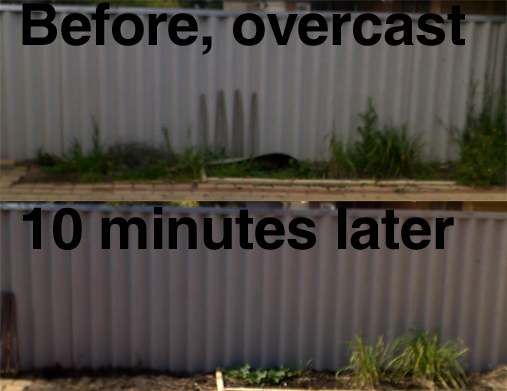 Before and After 10 minutes of weeding