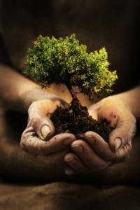 priority tree garden design