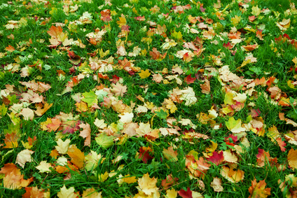 5 maintenance tips for your autumn lawn and gardens - Autumn lawn care advice ...