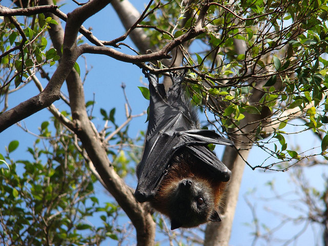 Encourage native animals such as bats