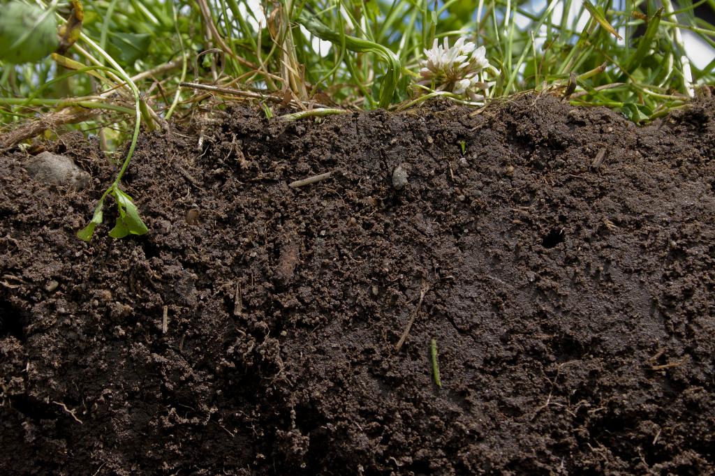 Healthy garden soil