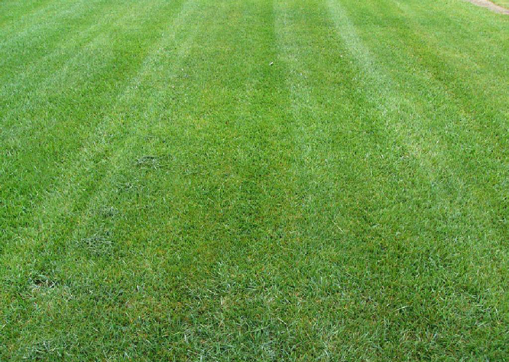 Landscaping With Bermuda Grass : Lawn alternatives to consider