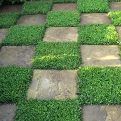 10 Lawn Alternatives To Consider