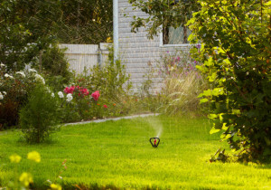 5 Common Lawn Care Problems & How To Fix Them