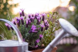 Smart Ways to Reuse Materials in the Garden2