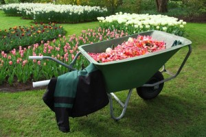 The most pleasant and yet important garden exercises