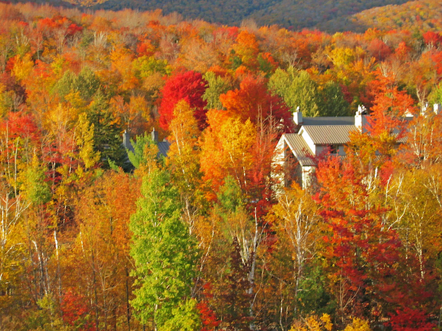 Collette's suite of Fall tours offers travellers a kaleidoscope of seasonal colour