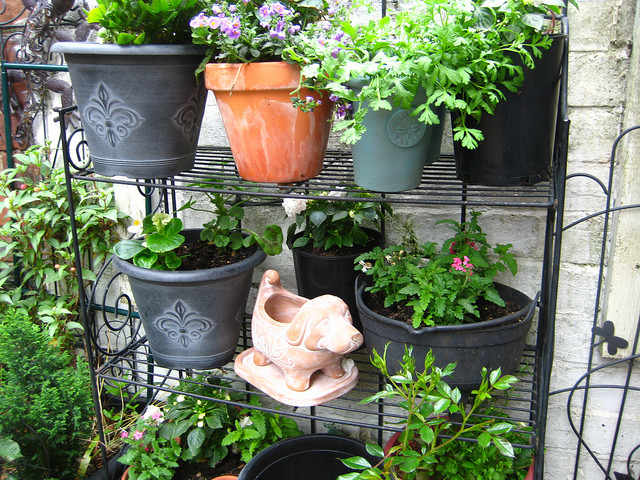 Best Soil For Pots