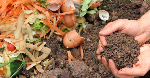 Compost is most often made of manures or decaying plant matter like grass clippings