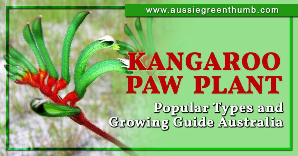 Kangaroo Paw Plant Popular Types and Growing Guide Australia