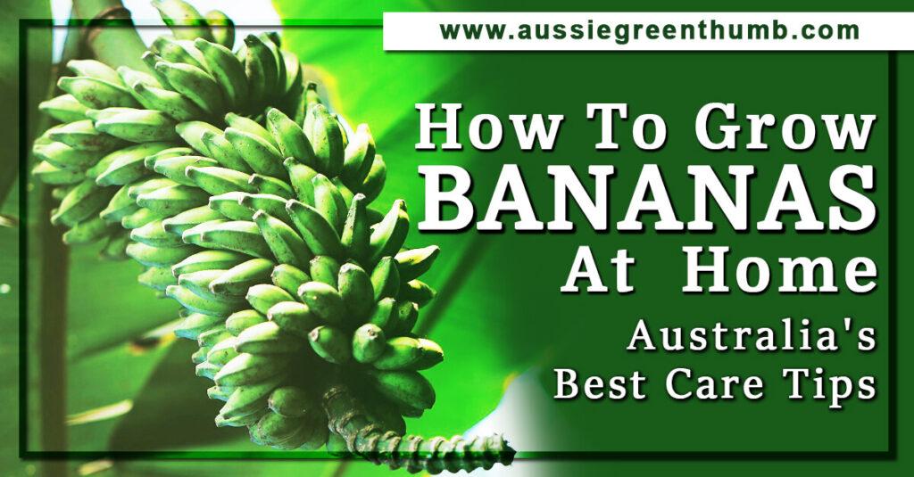 Grow Bananas At Home