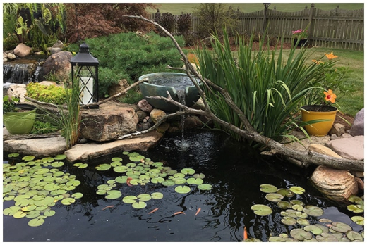 Outdoor Pond Educational Benefits