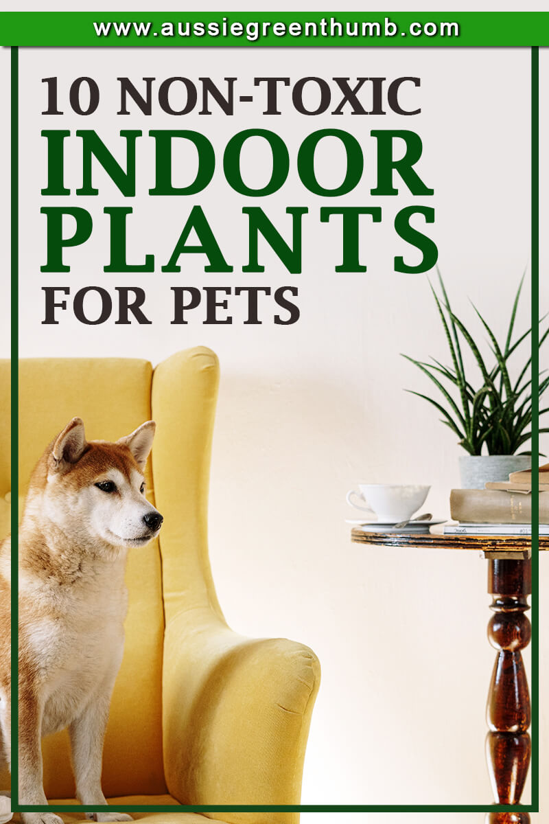 10 Non-Toxic Indoor Plants For Pets