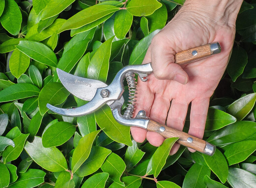 Different Types of Secateurs