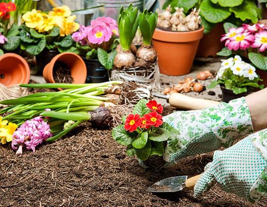 Garden soil is a common option for your soil pot
