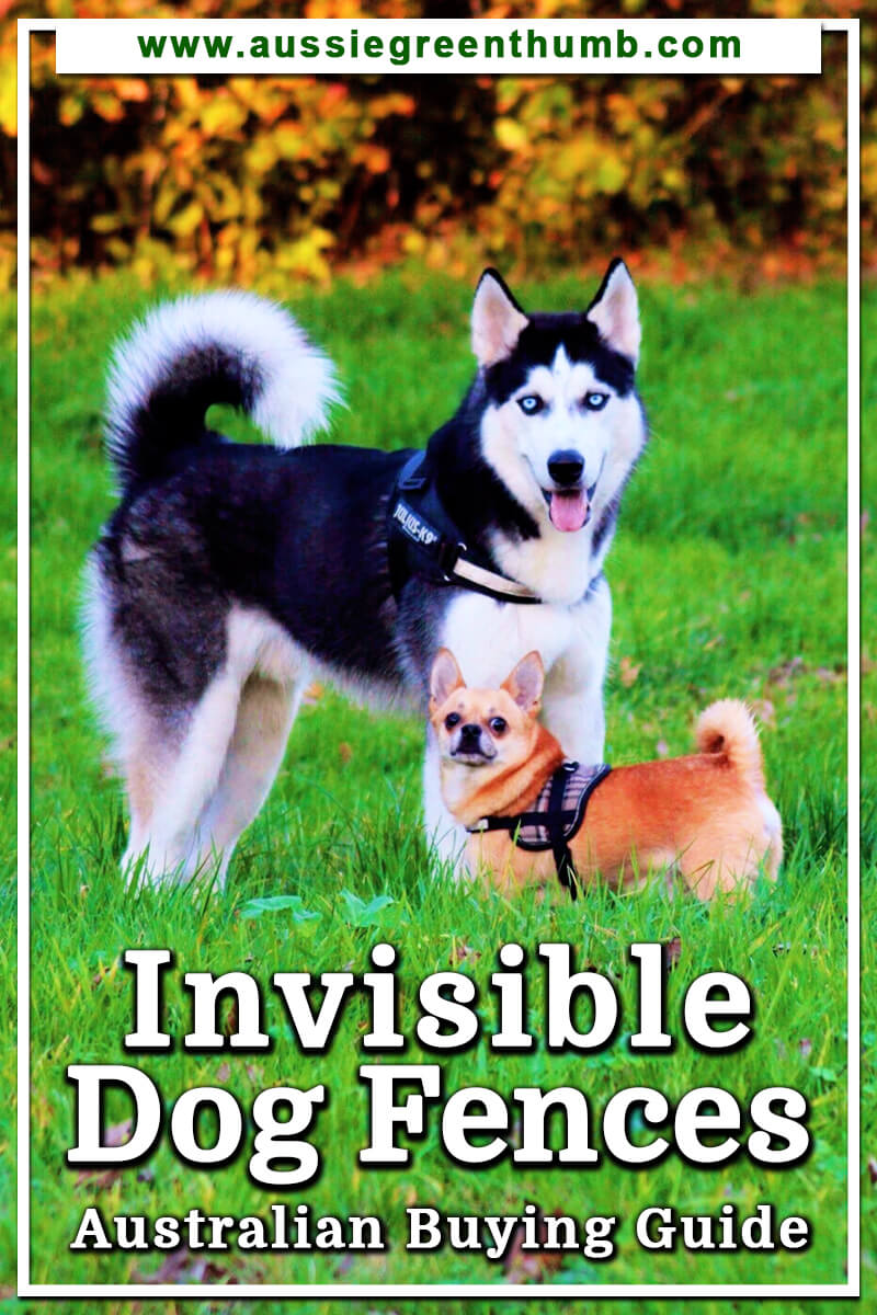 Invisible Dog Fences Australian Buying Guide