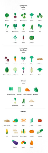Vegetable Growing Infographic