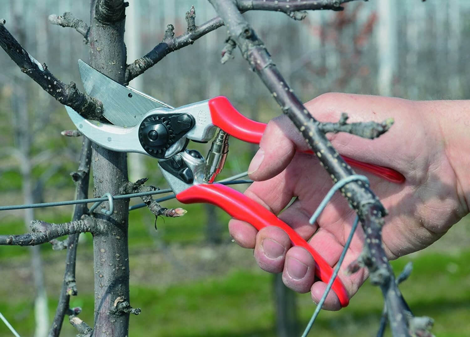 What Are the Best Secateurs