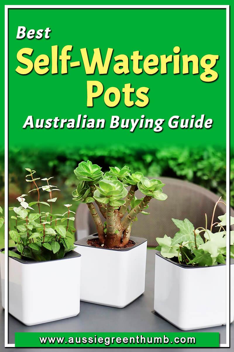 Best Self-Watering Pots Australian Buying Guide