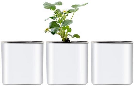 GardenBasix 4 inch Self Watering Modern Decorative Pot