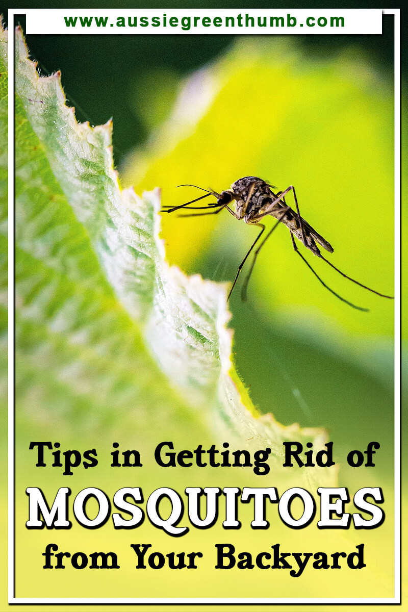 Tips in Getting Rid of Mosquitoes from Your Backyard