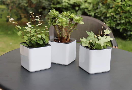 What are Self-Watering Pots?