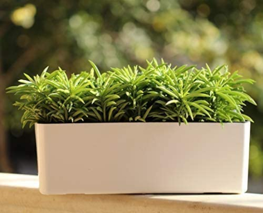 What is the Best Self-Watering Planter