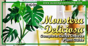 Monstera Deliciosa Complete Swiss Cheese Plant Guide