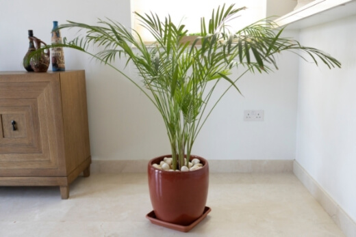 Bamboo palm are really good at air purification, and can give you a bit of different texture if you're grouping some plants together