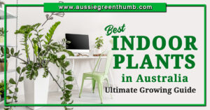 Best Indoor Plants in Australia Ultimate Growing Guide
