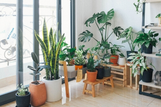 Best Indoor Plants in Australia