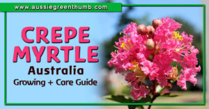 Crepe Myrtle Australia Growing and Care Guide