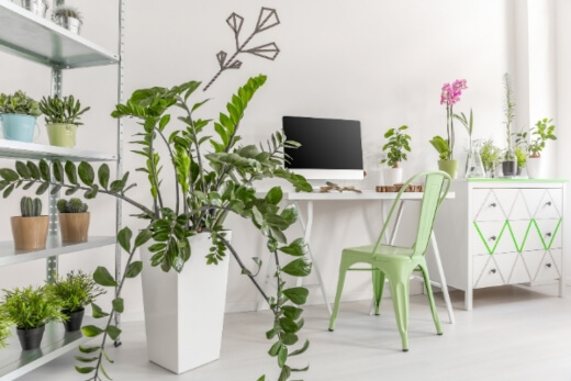 Indoor plants are a great addition to any indoor space