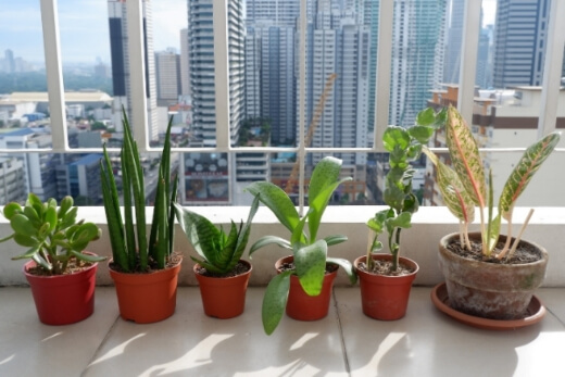 Light is the most important thing to consider when buying an indoor plant