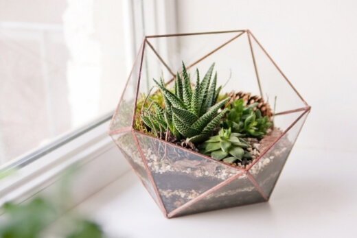 Succulents can sit in the hottest part of your house and be perfectly fine