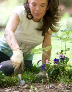 Gardening ebook by Aussie Green Thumb - Chapter 5 Common Gardening Tasks