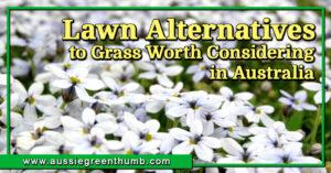 10 Lawn Alternatives to Grass Worth Considering in Australia
