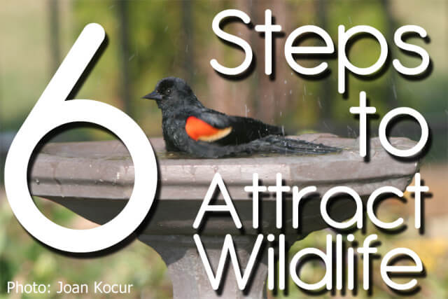 6 Steps to Attract Wildlife