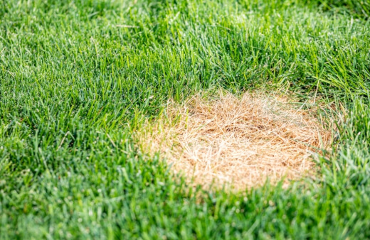 Bald grass spots are something that can draw weeds to them right away.