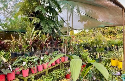 Best Australian Tropical Plants
