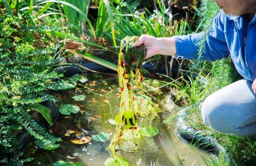 Getting rid of string algae