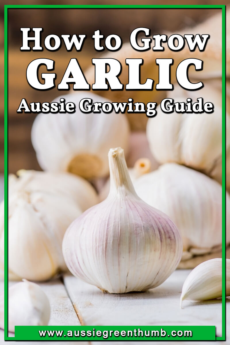 How to Grow Garlic Aussie Growing Guide