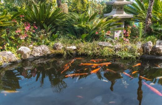 Pond algae treatment
