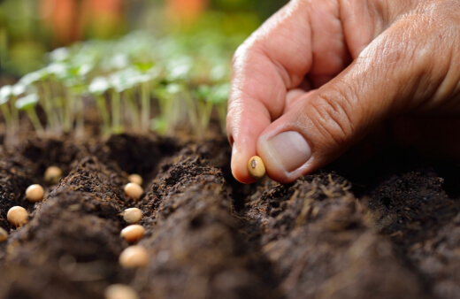Pros and Cons of Germinating Seeds