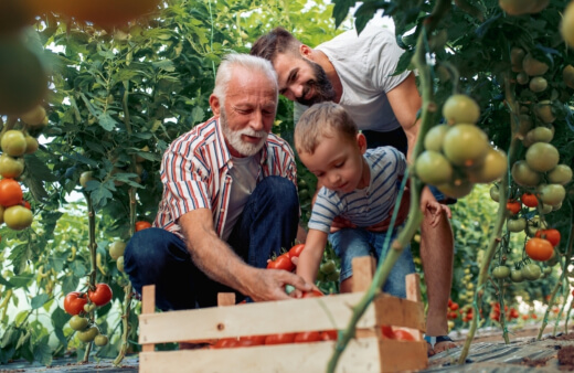 a family growing vegetables