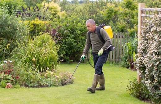 applying weed killers for lawns