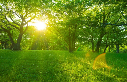 lawn problems and solutions australia