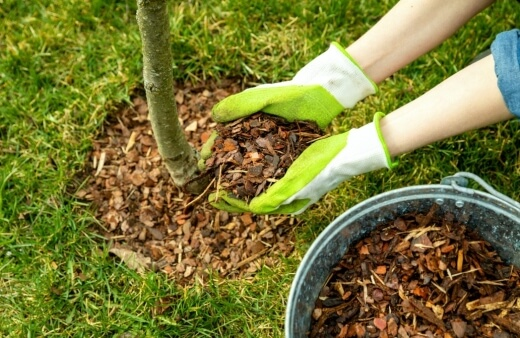 How To Use Mulch in Australia